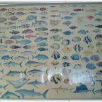 魚のポスター